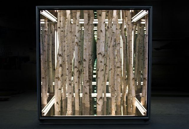 Anthony James - Birch cube - 2011 - courtesy l'artista & Brand New Gallery, Milano