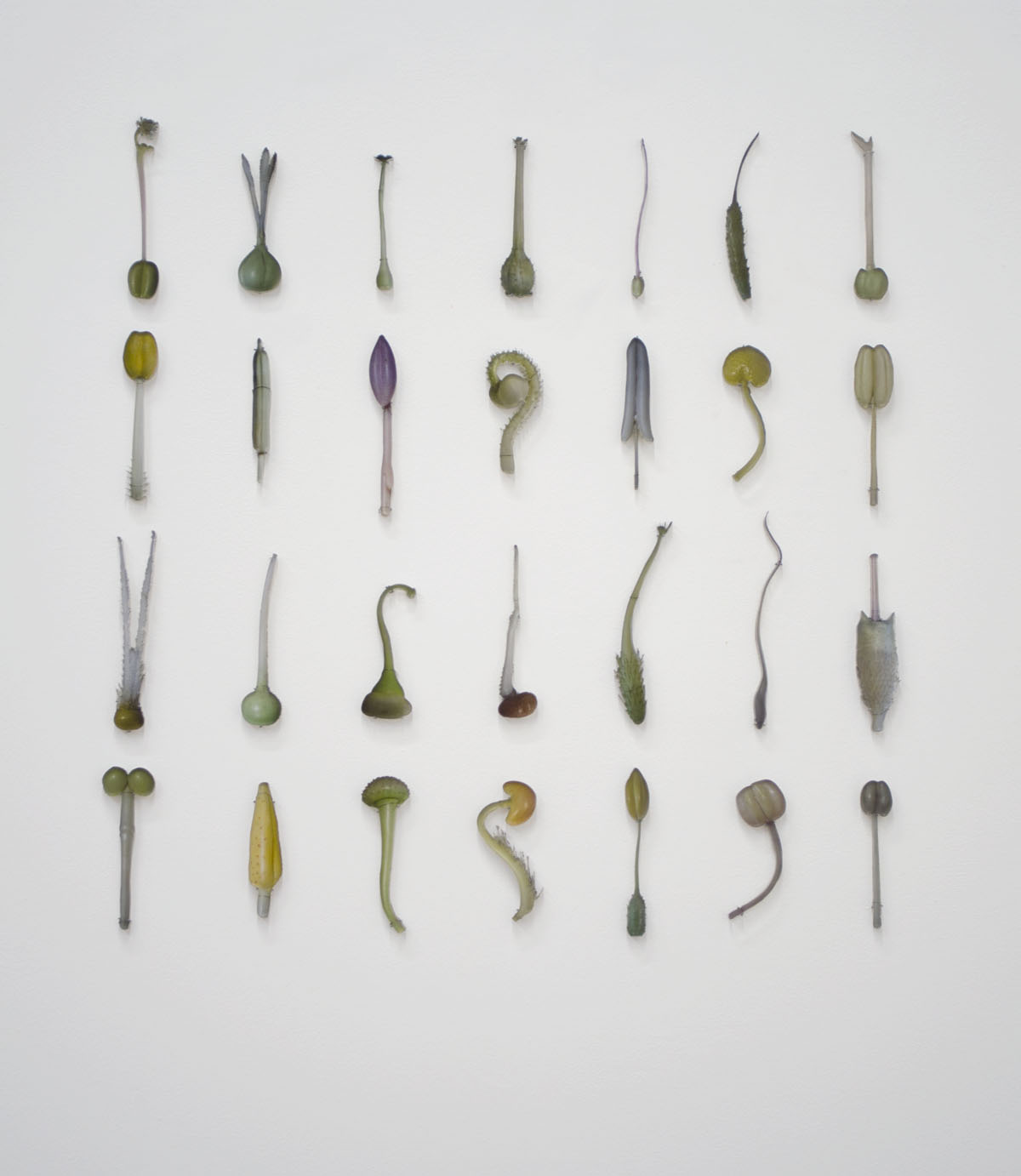 Andrea Frank - Pistils and Stamen - 2012 - Blaschka Glass Flowers, Harvard Museum of Natural History