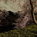 Ori Gersht, After Dark, 2010 - Courtesy of the artist and Brand New Gallery, Milano