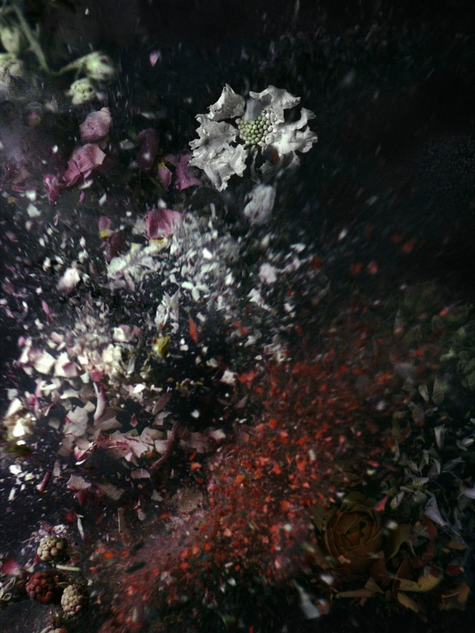 Ori Gersht - Untitled (Time After Time series) - 2006 - courtesy l'artista & Brand New Gallery, Milano