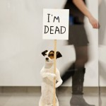 David Shrigley - I'm dead - 2010 - photo Linda Nylind
