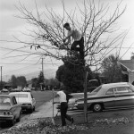 Bill Owens - Suburbia Series - 1970/1972 - My Dad Thinks It's A Good Idea To Take All The Leaves Off The Tree And Rank Up The Yard. I Think He's Crazy - 1971