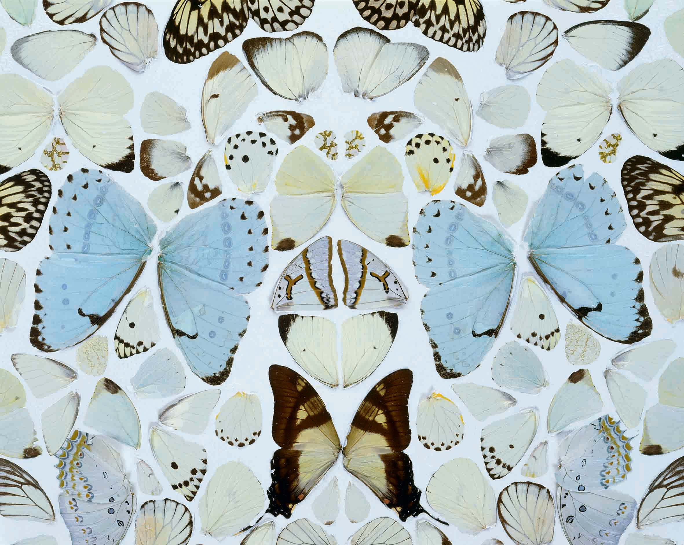 Damien Hirst - Simpathy in White Major. Absolution II - 2006