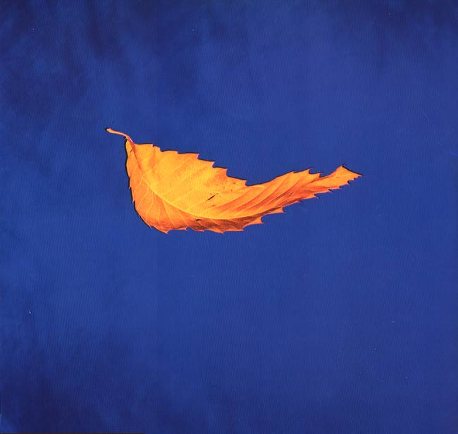 New Order, True faith 1987 - cover by Peter Saville