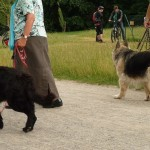 dOCUMENTA (13) – Visitatori verso Dog Run di Brian Jungen – Karlsaue