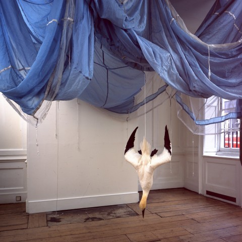 Dorothy Cross, Parachute, 2005, Collection Irish Museum of Modern Art