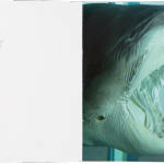 Damien Hirst, ABC - Jaws