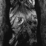 Walter Chappell, Female Water Torso, 1973, Stampa ai sali d'argento,  © The Estate of Walter Chappell