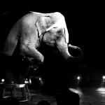 The memory of a dream (elephant on stage), Elisa Sturaro © Elisa Sturaro, Sony World