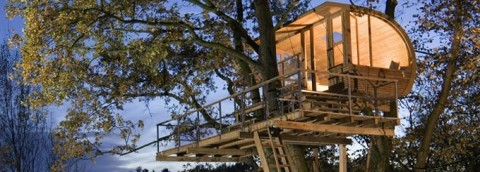Triumph Treehouse Competition