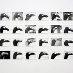 Fondazione Giuliani - The Registry of Promise The Promise of Melancholy and Ecology-Jochen Lempert -The Skins of Alca impennis-silver gelatin print-Photo Giorgio Benni