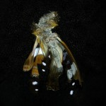 Mat Collishaw, Insecticide 38, 2011, c-type photograph, 182 x 182 cm, Ed. 2 of 3 + 2 AP's