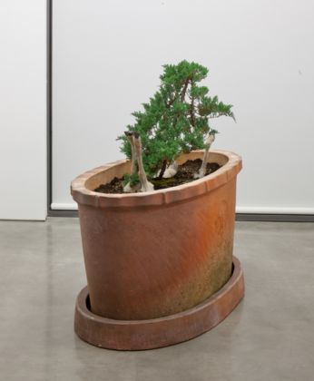Huang Yong Ping, Lamb Plant, 2012 - courtesy dell'artista e Gladstone Gallery