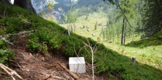 Political Landscape - Angelika Loderer, Larches and Stones
