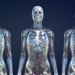 Human Bodies: The Universe Within – Courtesy Ars Electronica Futurelab Zygote Media Group