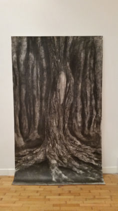 My roots can hear the leaves grow - Montoro12, Roma 2015 - Lucilla Candeloro