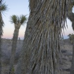 Ubiquity Land - Joshua Tree