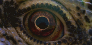 Terrence Malick, Voyage of Time