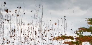 Ori Gersht, Floating World Hanging Sky 03, 2016