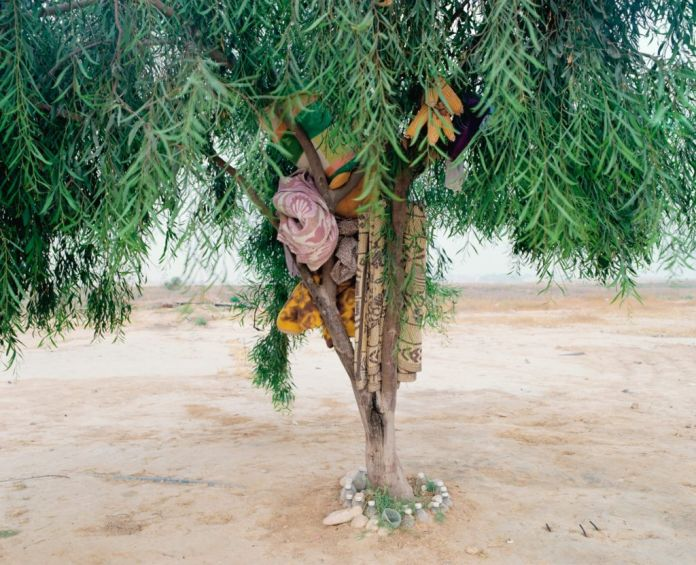 Ron Amir, Bisharah and Anwars Tree, 2015