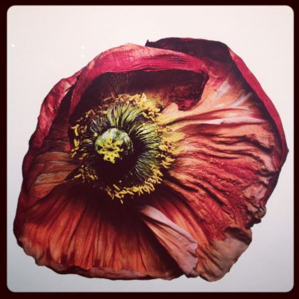 Flowers by Irving Penn