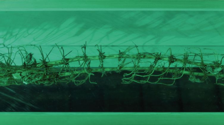 Teres Wydler, Controlled Versus Uncontrolled Nature, 2013. Courtesy Teres Wydler