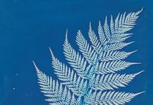 Anna Atkins, New Zealand, 1848-1859