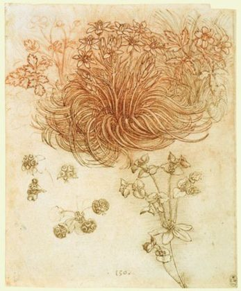 A star of Bethlehem and other plants, c.1506–12, red chalk, pen and ink