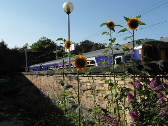 Edge Hill Station Garden at Metal, Liverpool