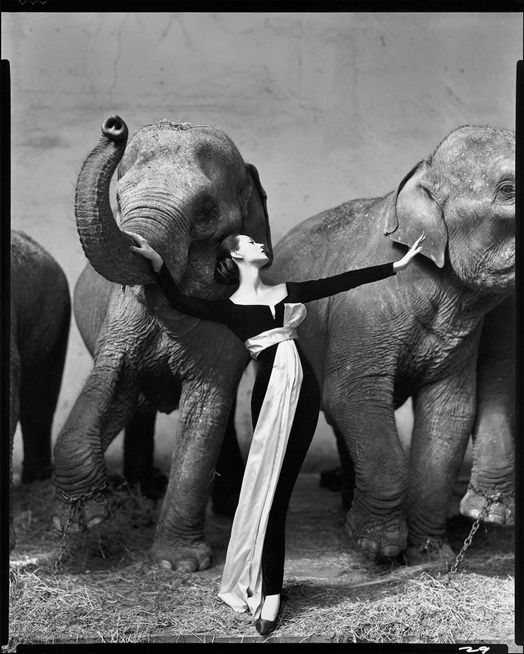 Richard Avedon, Dovima with Elephants, Evening Dress by Dior, Cirque d'Hiver, Paris, 1955 © Christie's Images Limited 2018