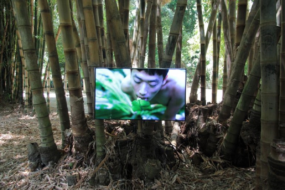 Zheng Bo, Pteridophilia (2016 – in corso), video. Ph. Manifesta12