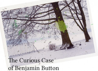 Teodoro Lupo – The Curious Case of Benjamin Button