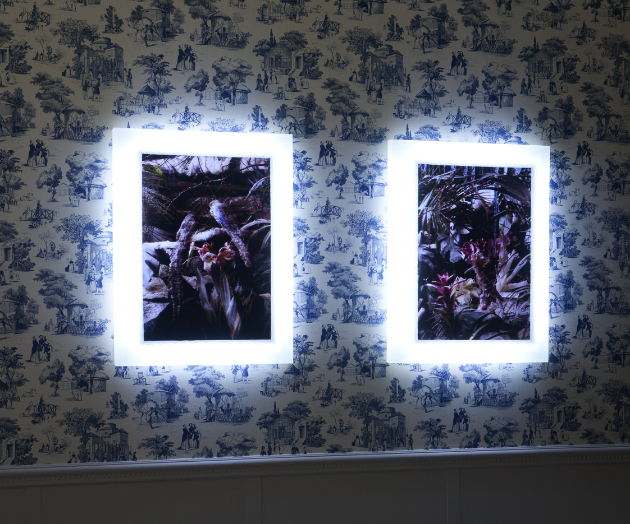 Mat Collishaw - The Crystal Gaze - veduta della mostra presso la Galleria Raucci/Santamaria, Napoli 2012 - photo E. Velo