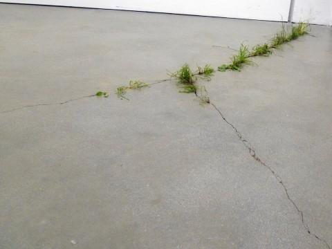 Helena Hladilovà, Self-made, 2012, erba, crepe, dimensioni site specific