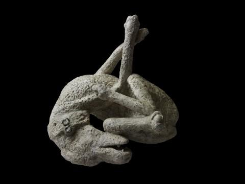 Plaster cast of a dog. Dalla Domus di Orfeo, Pompeii, 79 d.C. - Copyright Soprintendenza Speciale per i Beni Archeologici di Napoli e Pompei / Trustees of the British Museum