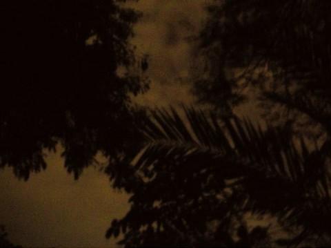 Anri Sala, Untitled (Botanical), 2007 - fotografia