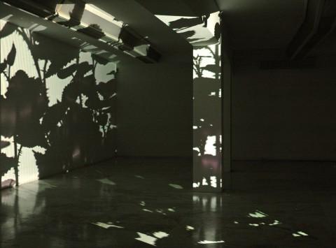 Paolo Piscitelli - Some prefer nettles - veduta della mostra presso il MLAC – Museo Laboratorio di Arte Contemporanea, Roma 2007
