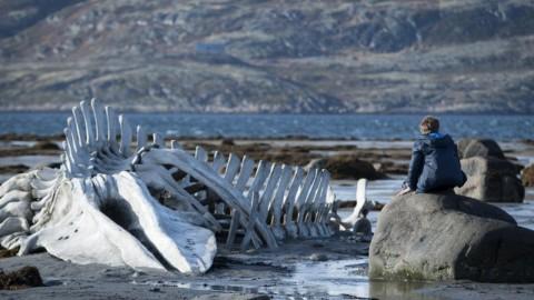 """""""Leviathan"""" di Zvyagintsev"""