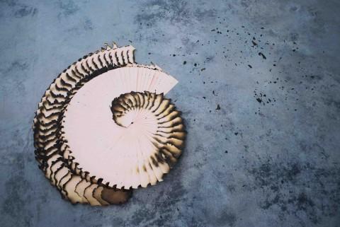Valentina Dotti, Risma, 2011, carta, dimensioni variabili, fra i 60 cm e 120 cm.