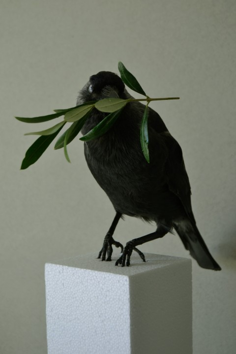 Gabriel Stoian, assemblage, taxidermy bird and olive branch, 40 x 30 cm, 2014. Courtesy of the artist and Bucharest Biennale
