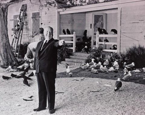 """Alfred Hitchcock sul set de """"Gli Uccelli"""" (1963) © 2014 Universal Studios. Tutti i diritti riservati, MONDADORI PORTFOLIO/ALBUM"""