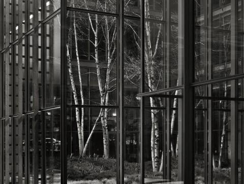 New York, 2014 © Photo Pino Musi