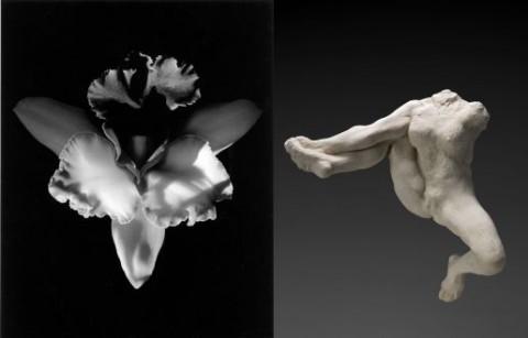 Robert Mapplethorpe, Orchid, 1985 – Auguste Rodin, Iris messagère des dieux, vers 1891-1893, terre cuite