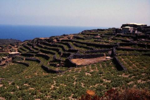 Entroterra di Pantelleria, Trapani © Renato Bazzoni
