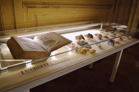 Sissi - Manifesto Anatomico - veduta della mostra presso Biblioteca Comunale dell'Archiginnasio, Bologna 2015 - photo Ilaria Medda