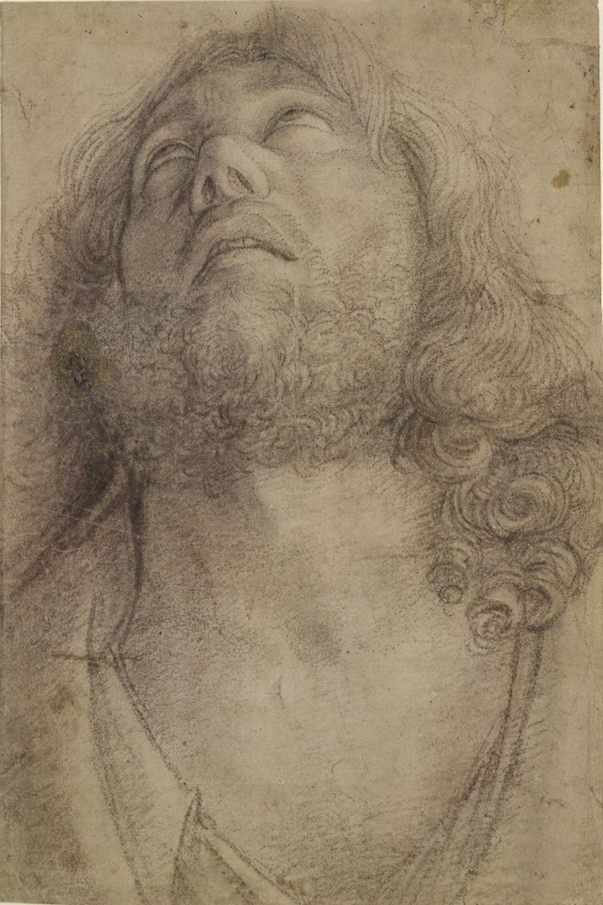 Giovanni Bellini, Testa di un uomo che guarda verso l'alto, con i capelli lunghi e barba, 1450-1516 - British Museum, Londra