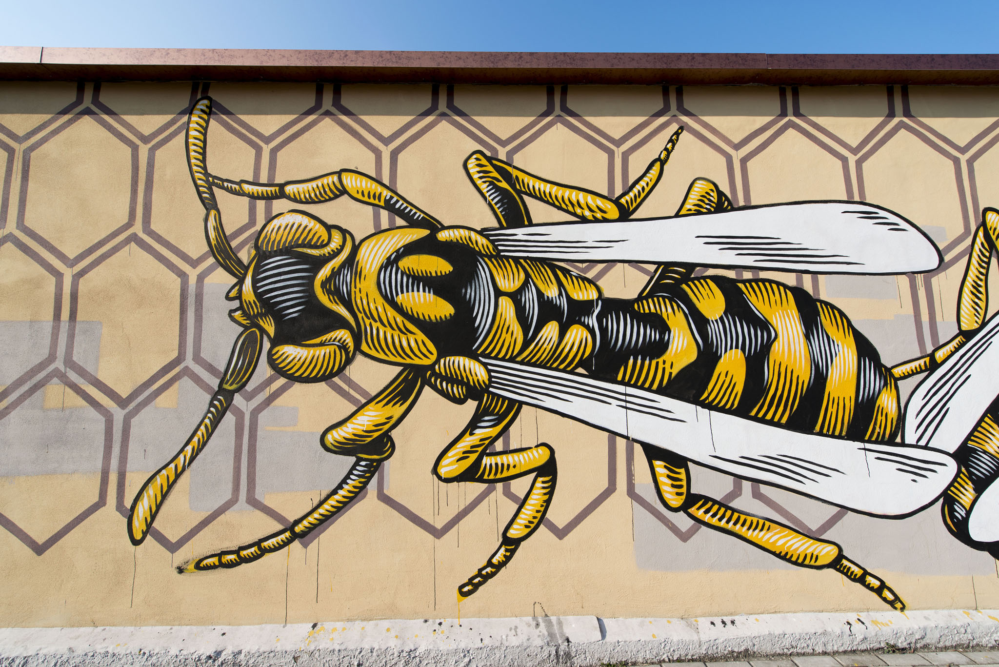 Streetart roma la guida che mancava. tutti i murales in una app