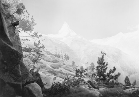 Hiroshi Sugimoto, Birds of The Alps, 2012 - courtesy l'artista