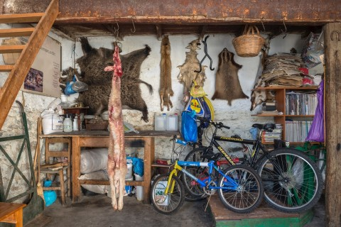 Maria Papadimitrou, Agrimiká. Why look at animals_ - materiali per il Padiglione della Grecia - Biennale di Venezia 2015