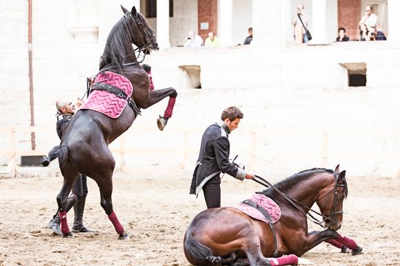Giovanni Lindo Ferretti, L'opera equestre-Saga IV. Il canto dei canti - photo Andrea Grassi